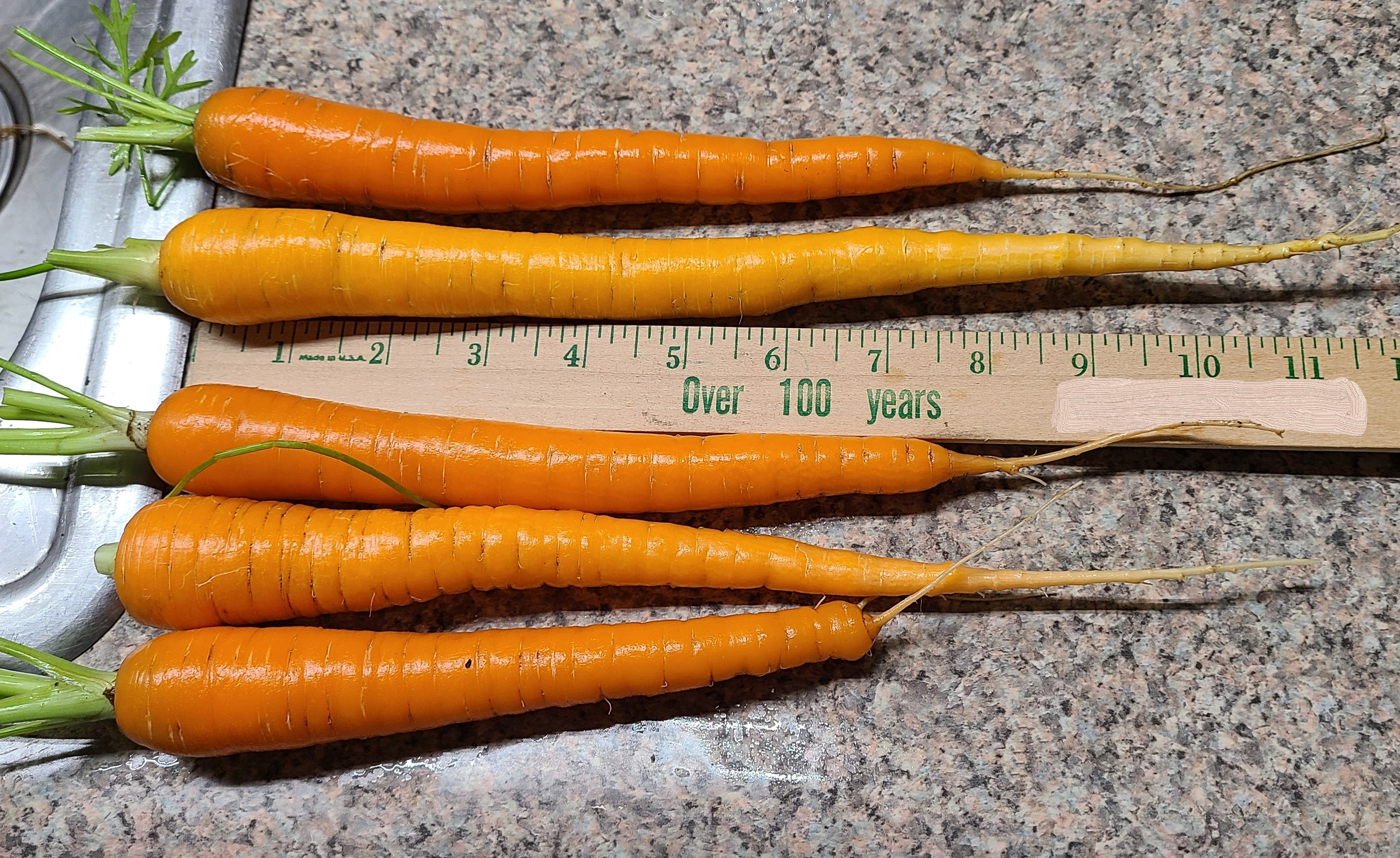 Growing Good Carrots; Let's Talk About This Root-Crop and How to Grow Them