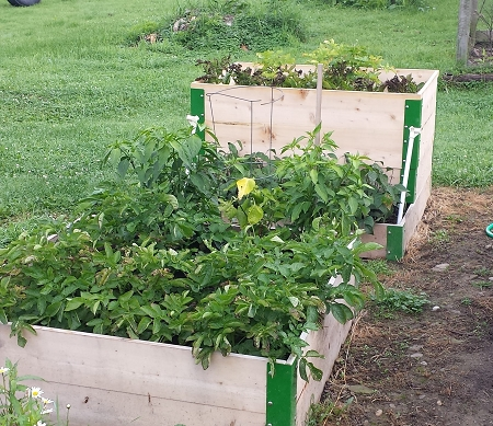 What Kind of Soil Should I Use in My Raised Bed Vegetable Garden?