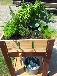 Herb and Salad Bowl Garden Planter - 2' x 2' x 36